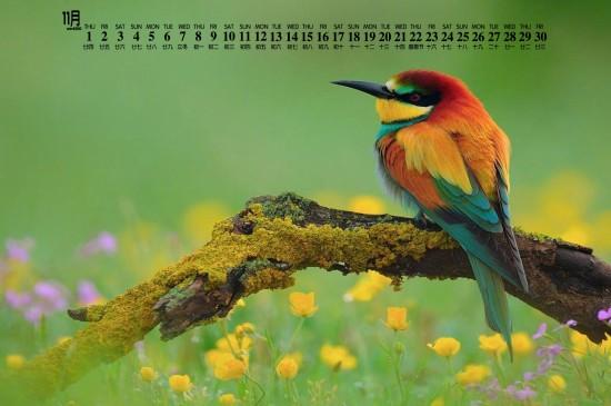 2018年11月小巧鸟类图片日历壁纸