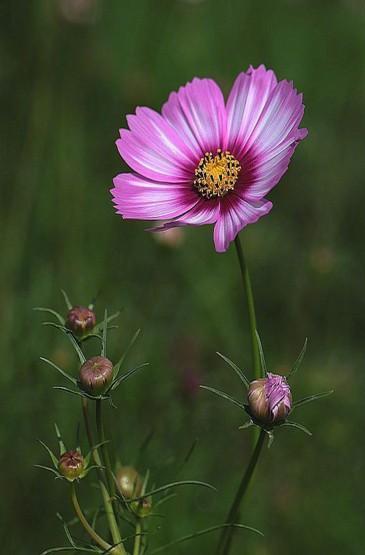 唯美花卉高清图片手机壁纸