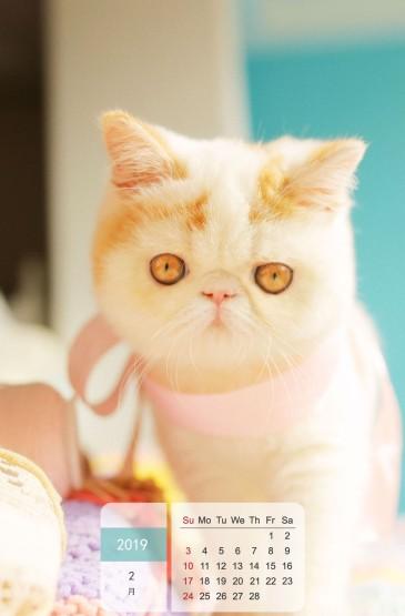 2019年1月可爱呆萌猫咪日历图片手机壁纸