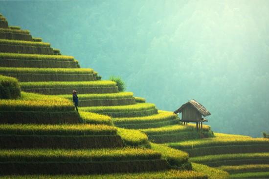沙漠森林自然山水风景唯美高清绿色桌面壁纸