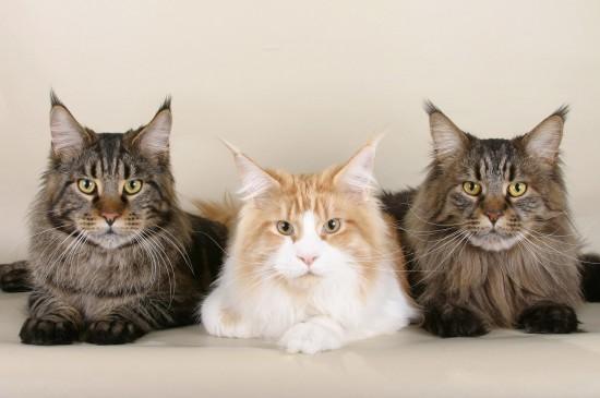 呆萌可爱猫咪摄影图片桌面壁纸