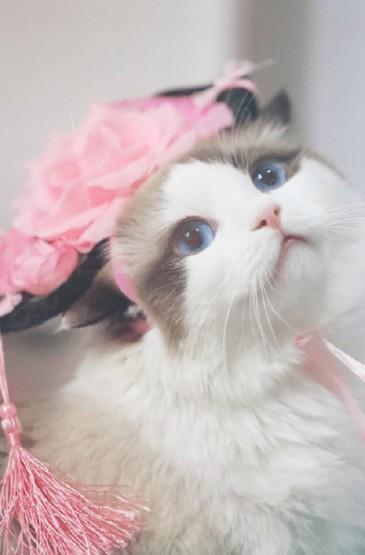 <乖巧可爱猫咪图片手机壁纸