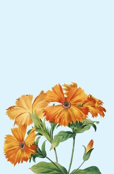 植物手绘创意高清手机壁纸