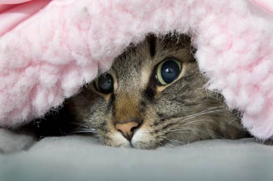 超可爱猫咪高清图片桌面壁纸