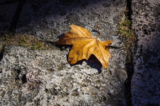 <秋天落叶风景图片桌面壁纸