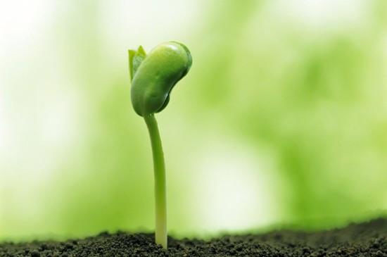 绿色护眼清新植物图片电脑壁纸