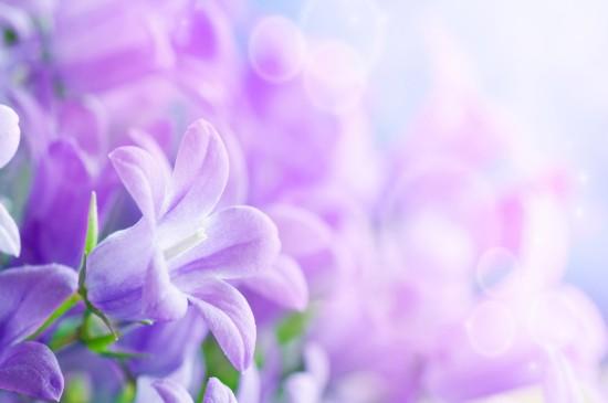 清新护眼花卉高清图片桌面壁纸