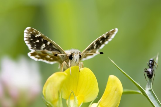 唯美彩色蝴蝶高清图片桌面壁纸