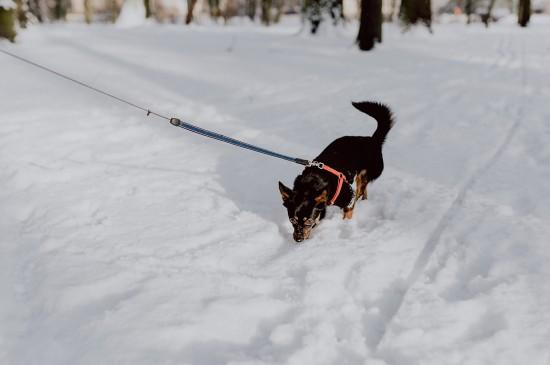 清新唯美雪景图片桌面壁纸