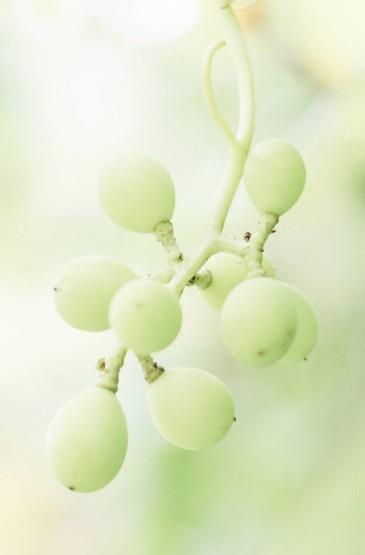 绿色小清新植物高清手机