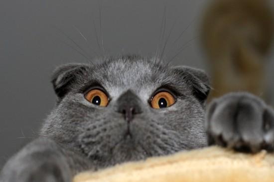 云吸猫可爱萌宠猫咪高清小动物桌面壁纸