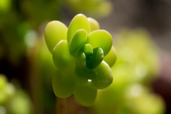 小清新花卉高清图片桌面壁纸