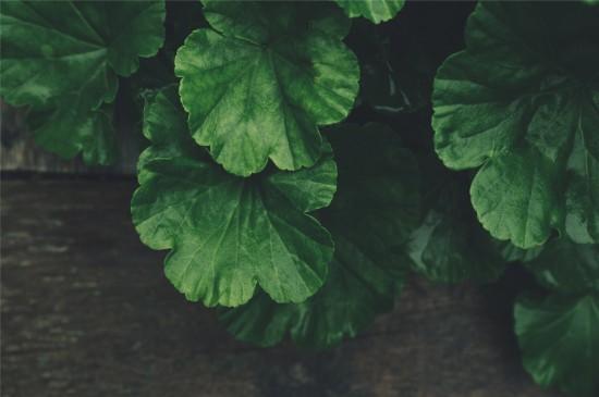 护眼绿叶植物高清桌面壁纸