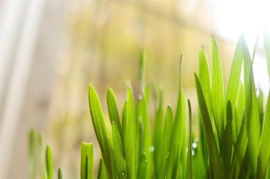 养眼植物绿叶嫩芽高清桌面壁纸