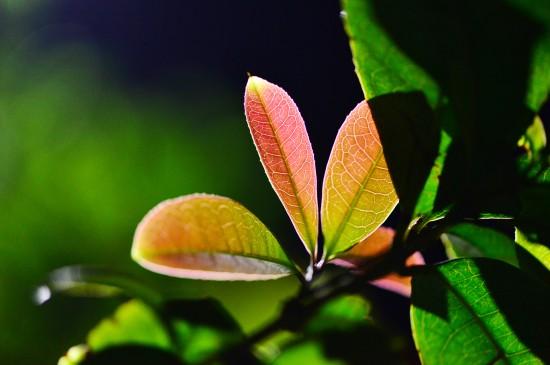 <清新养眼绿色植物高清桌面壁纸