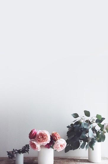 简洁盆栽花卉高清手机壁