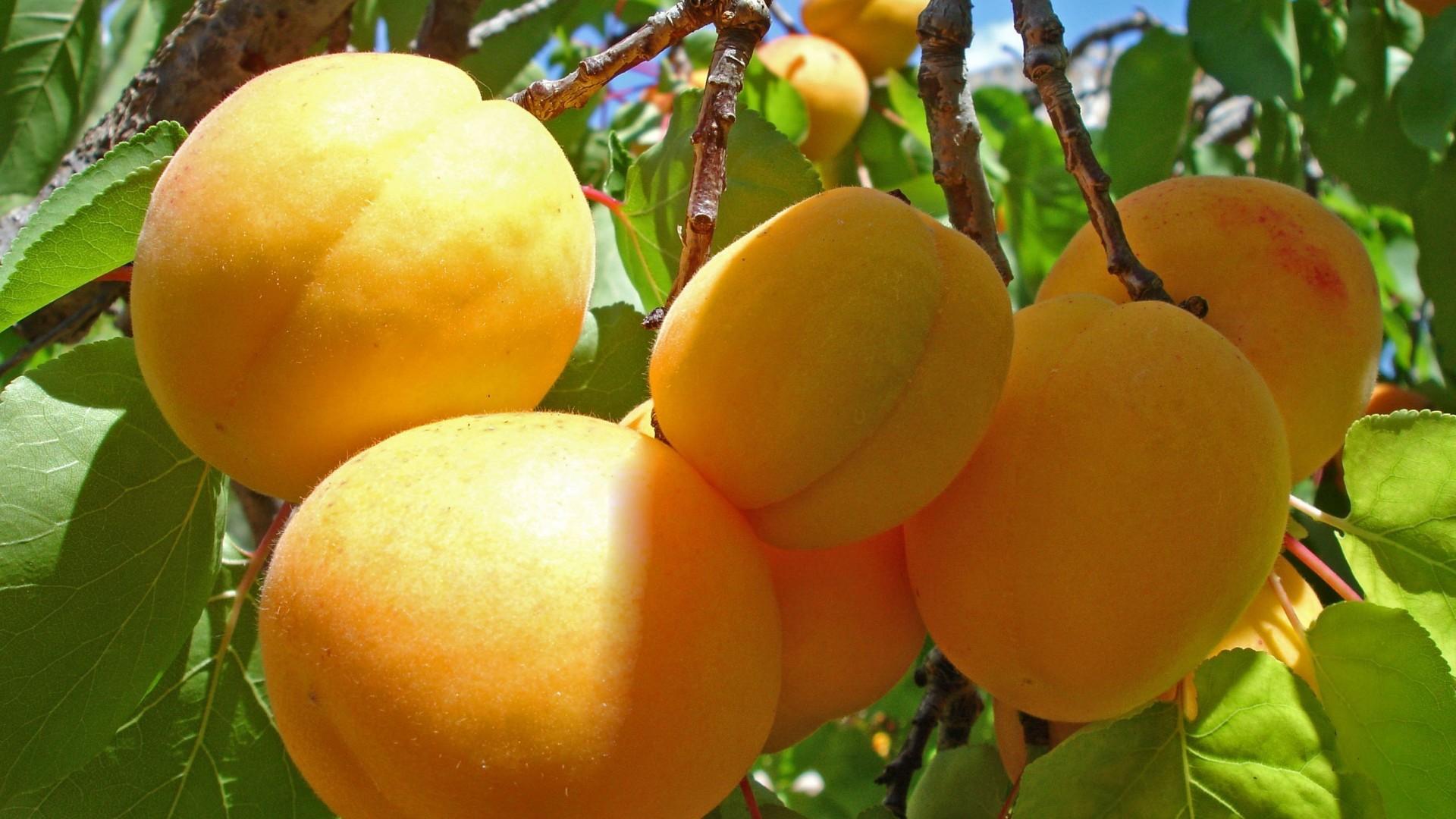 黄桃蓝莓高清水果美图桌面壁纸