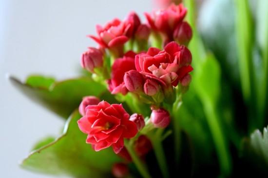 精选唯美清新花卉图片电脑壁纸