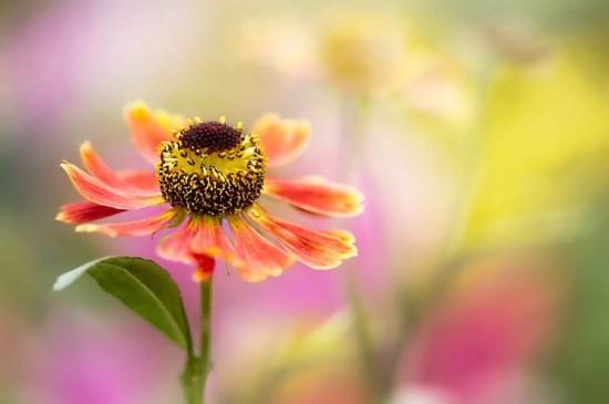 <清新护眼植物花卉图片电脑壁纸