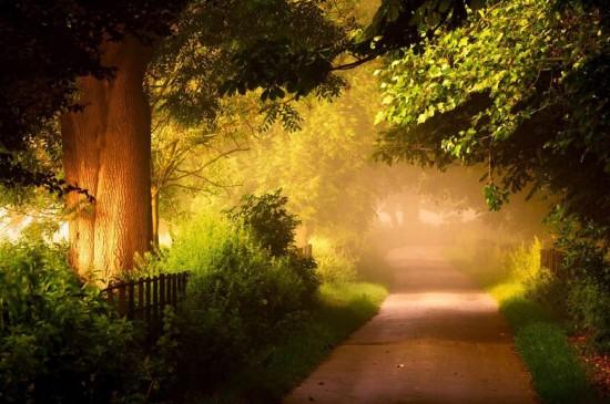 <唯美森林小道风景图片桌面壁纸