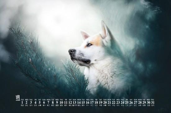 2019年1月小狗日历图片桌面壁纸