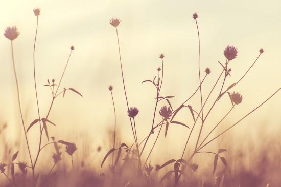 <清新养眼花卉图片桌面壁纸