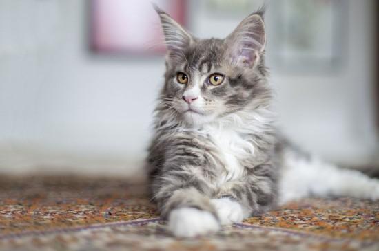 可爱猫咪高清桌面壁纸图片