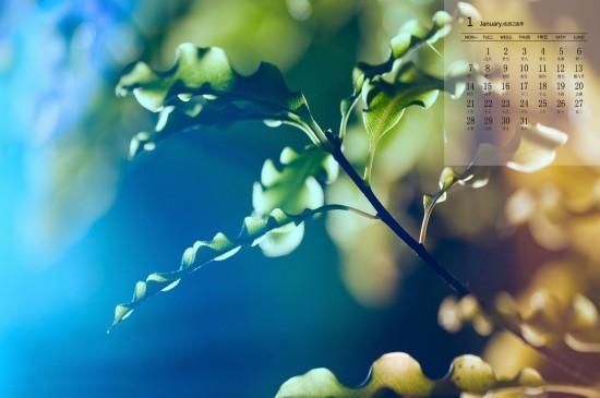 <2019年1月绿色植物图片日历壁纸