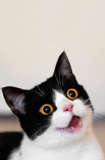 <可爱小黑猫高清手机壁纸图片