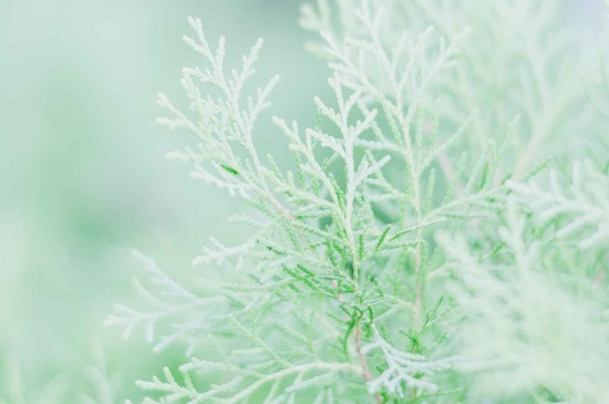 <养眼绿色植物清新高清桌面壁纸