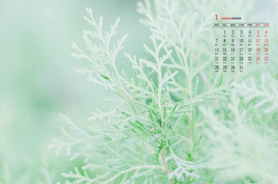 2019年1月养眼绿色植物清新高清日历壁纸