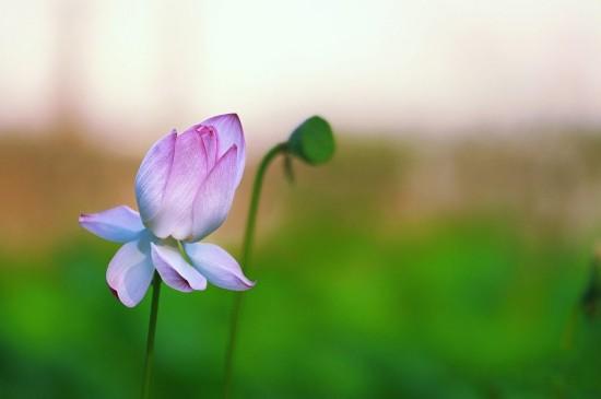 小清新植物花卉高清桌面壁纸