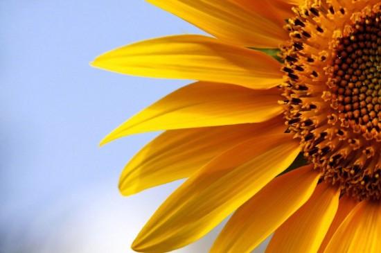 <小清新花卉微距摄影图片桌面壁纸