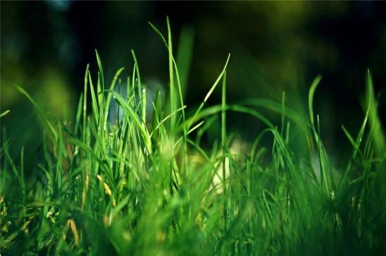 大自然里的清新绿色高清桌面壁纸