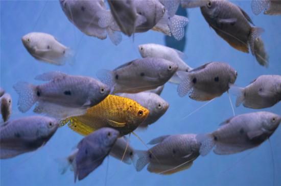 漂亮的海洋鱼类唯美高清桌面壁纸