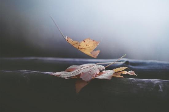 清新唯美植物叶子高清桌