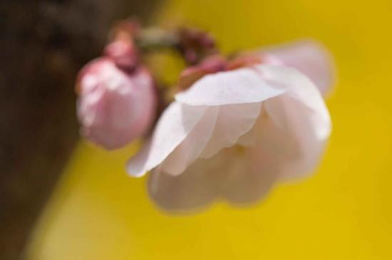 冬日梅花唯美高清桌面壁