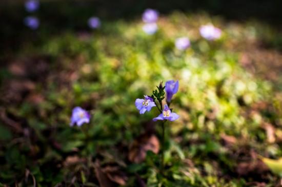 小清新植物花卉高清桌面