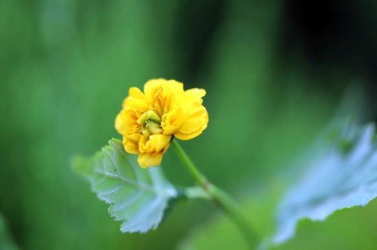 <超清护眼花卉摄影图片电脑壁纸