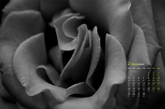 2019年2月黑白花卉摄影