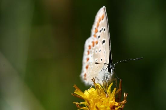 美丽的蝴蝶图片桌面壁纸