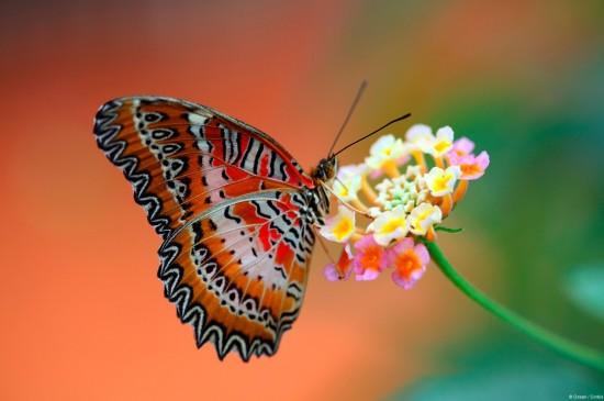 花丛中蝴蝶唯美高清桌面壁纸