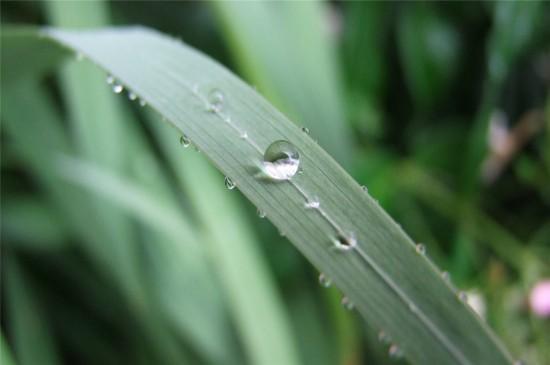 绿叶小草上的水珠高清桌面壁纸