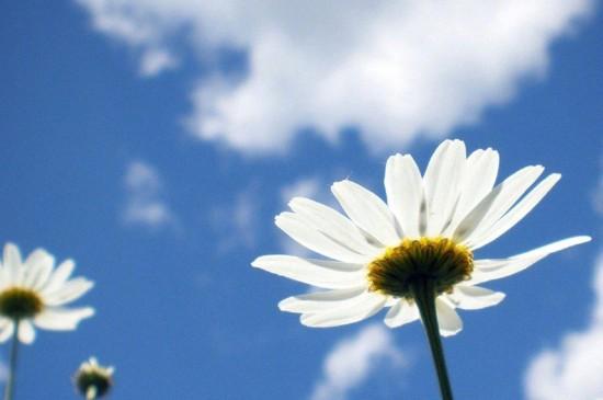 清新唯美花卉微距摄影图片桌面壁纸