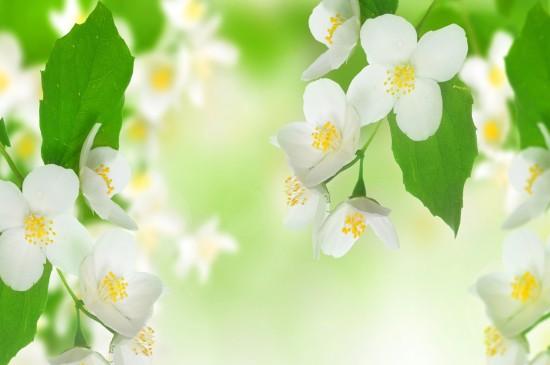 小清新养眼花卉桌面壁纸
