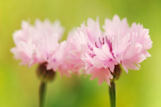 <清新唯美意境花卉桌面壁纸