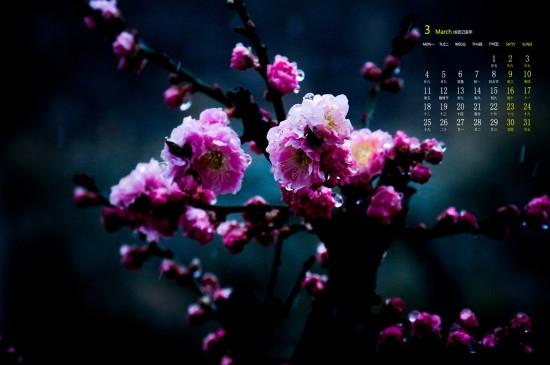 2019年3月千姿百态的梅花唯美高清日历壁纸