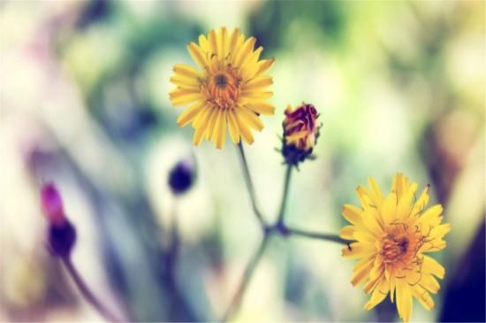 <唯美小清新植物风景高清桌面壁纸