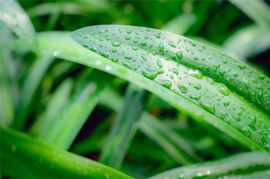 绿色叶子护眼高清桌面壁