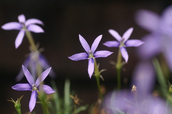 <唯美养眼花卉图片桌面壁纸